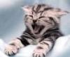 laughter cat
