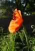 queenofcorona userpic