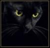 black_cat_23