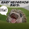 Becky: hedgehog-ha