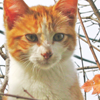 palewhiskers userpic