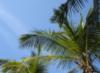 Пальмы в синем