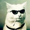 cat smoke