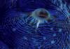 mare_e_vino userpic