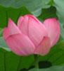 rozzy userpic