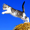 cat_leaping