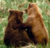 amamama: Bear - you've got a friend in me