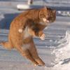 ottogrib: cat