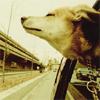 gremlinpuppy userpic