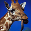 patchx userpic