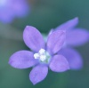 purplicious userpic