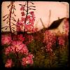 applewishes userpic