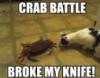 fight, crab, battle, crab battle, snafu