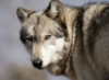 thelonewolf78 userpic