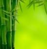 bamboo39108 userpic