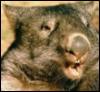lecturingwombat