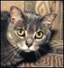 Rose Cat: ten wow