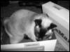 liz voss: box