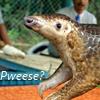Pweese?