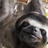 accutane_sloth userpic
