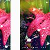 its_summerlove userpic