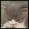 widget_kitty userpic