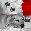 Connor schwarz/weiß/rot