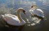 лыбеди