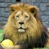 лева с мячиком