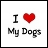 Shannon: Dogs - I Love My Dogs