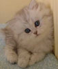 possum_cat userpic