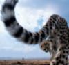 Неприятности - коту под хвост