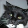 CatDog: Оська