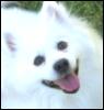 my pup