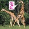 Intrepid Pirate and Questionable Cartoonist: amorous giraffe {loveyoo}