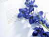 Blumen auf dem Buch