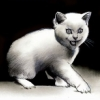 Al Columbia Cat
