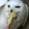 fladdermus userpic