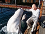 море, дельфины, kyk48