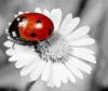 ruga_mavpo4ka userpic