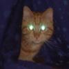 Манин кот