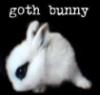 goth bunny silly