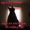 Agnostic Cat