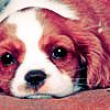 Miriamele: Puppy eyes
