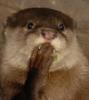 Janet Miles, CAP-OM: ottar-oops
