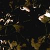 selva oscura