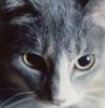 selva oscura: parker eyes