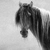 Jill: Horses free
