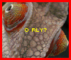 chameleo rly?