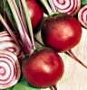 roasted_beets
